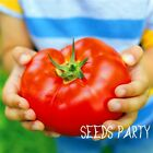 200 Pieces Big Beef Hybrid Tomato Seeds, Extra-large, Extra-meaty,tomato # 91