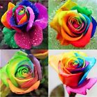 USA Seller 100pcs Colorful Rainbow Rose Flower Seeds Home Garden Plants