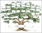 Family Tree Chart 5 to 6 Generations Genealogy 14x18 Ivory Color