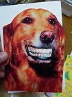 Funny Happy Birthday Greeting Card w envelope Dog with dentures