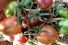 Pink Green Plum Tomato - A Great Looking Tomato with a Robust Taste - 10 Seeds!!