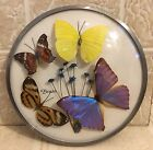 Vintage Real Butterfly Wall Hanging 7 dia Glass Bubble Brazil Mid Century