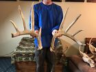 Giant 165 10 Point whitetail deer Shed antlers taxidermy horns RACK cabin