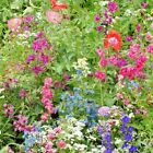 2000+ANNUAL PARTIAL SHADE WILDFLOWER MIX 18 Different Flowers Butterflies Bees