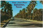 Galveston Texas Palm Lined Street TX chrome postcard