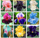 100pcs iris seeds,Iris orchid seeds,Rare Heirloom Tectorum Perennial Flower Seed