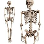 56ft Halloween Poseable Human Skeleton Full Life Size Props Party Decoration