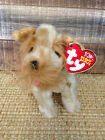 TY Beanie Baby  SCHNITZEL   Brand New Fast 1st Class Shipping!