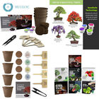 Planters Choice Bonsai Starter Kit The Complete to Easily Grow 4 Trees