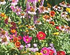 2000+ALL BUTTERFLY FLOWER MIX 21 Different Flower Seeds Perennial Annual Nector