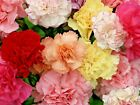 201+CARNATION CHABAUD MIX Flower Seeds 8 COLORS Big Long Lasting Blooms Garden