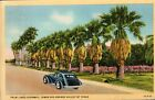 Postcard TX Palm Lined Highway Lower Rio Grande Valley Vintage Linen