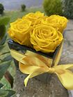 Yellow longlife Roses in glass cube