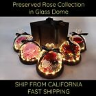 Preserved Eternal Rose Flowers in LED Glass Dome Night Light Mothers Day Gift