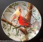 Kevin Daniels Birds of your Garden Collection -  The Cardinal - Limited Edition