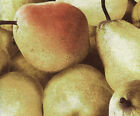 Quilt Fabric Food Fruit RJR Farmer's Market Large Pears FREE SHIPPING!!