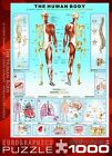Human Body 1000 Piece Puzzle NEW TOY-641