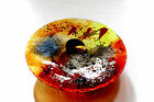 FUSED GLASS ART Red Yellow Blue Round Glass Platter  Ares Collection HAS 230