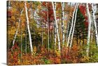 Vermont Birches Canvas Wall Art Print Tree Home Decor