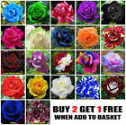 10x Rose Seeds Multi Coloured Rose Flower Seeds Home Garden Plant UK Rose Seeds