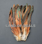 20+ Half bronze natural brown long iridescent rooster coque tail feathers real
