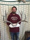 HUGE Trophy 11 Point Mule Deer Rack Mount horn antler Cape Unique Animal Head
