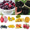 Multi Style Blueberry/Peach/Melon/Pear/Strawberry Fruit Seeds Potted Plant Seed