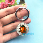 Lady Bug Art Photo Tibet Silver Key Ring Glass Cabochon Keychains 284