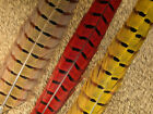 NATURES SPIRIT 2 DYED RINGNECK PHEASANT TAIL FEATHERS FLY TYING PICK COLOR