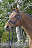 Stubben Waterford Snaffe Bridle Padded Headpiece Combined Noseband - Black/Black