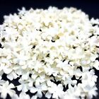 White MINI Flowers Mulberry Paper Petal for Card Making Craft  DIY Scrapbook