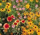 Outsidepride Perennial Wild Flower Seed Mix