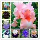 100pcs iris seeds Iris orchid seed Rare Heirloom Perennial Flower Seeds 24 colou