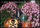 Lot of 5 Jack-O-Lantern Gourds Dried Natural Painted Black Cats