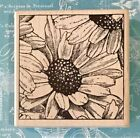 SUNFLOWERS by Magenta square frame seeds bees pollen botanical blooms invite htf