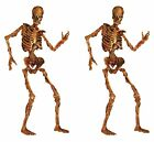 6 ft Life Size Jointed Skeleton Halloween Party Haunted House Decoration 2Pcs