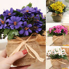 Artificial Fake Silk Daisy Flower Leaf Arrangement with Pot Grave Memorial Vase