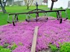 1000+PURPLE ROCKCRESS Flower Seed Perennial Groundcover Borders Basket Drought