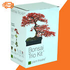 Bonsai Trio Kit 3 Distinctive Bonsai Trees to Grow Modern Home Plant Xmas Gift
