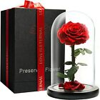 Halcyon Eternal Enchanted Forever Preserved Rose Infinity Rose in Glass Dome