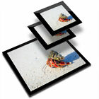Glass Placemat  2x Coaster Hermit Crab Shell Sandy Beach 16115