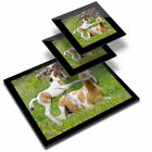 Glass Placemat  2x Coaster Horse  Foal Horses Playing 3946
