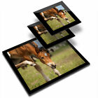 Glass Placemat  2x Coaster Young Horse Foal Pony 12878