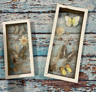 real BUTTERFLY art handmade in glass wood trim