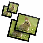 2 Glass placemates  2 Glass coaster Daisy Chain Baby Bunny Rabbit 15575