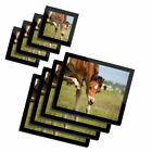 4x Glass Placemates  Coasters Young Horse Foal Pony 12878