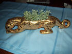 weeping gold panther planter