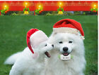 GPS Tracker Locator /TK909/IPX6 Waterproof / for Small PET Dog Cat / Person HOT