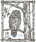 Owl in Birch Frame Wood Mounted Rubber Stamp NORTHWOODS NEW M9057