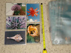 20th Century Plastics Photo album refill pages 3.5 x 5 inches, 100 pages total